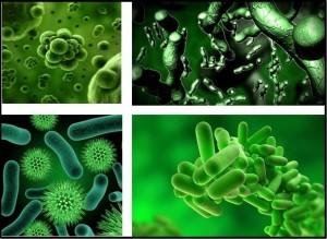 микробы и бактерии